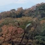 建長寺裏山からの富士山